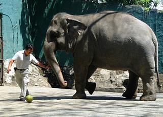 An Elephant Love Story
